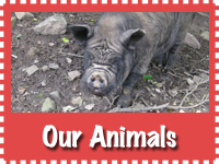our_animals